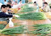 農作物の出荷調整作業